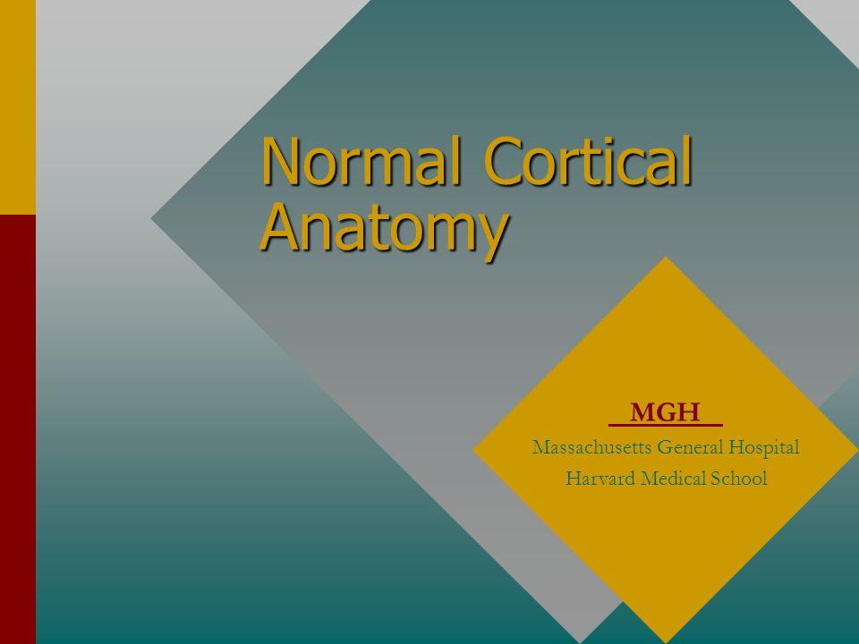 Normal Cortical Anatomy MGH Massachusetts General Hospital Harvard Medical School