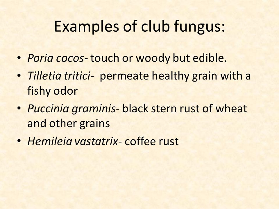 Examples of club fungus: Poria cocos- touch or woody but edible.