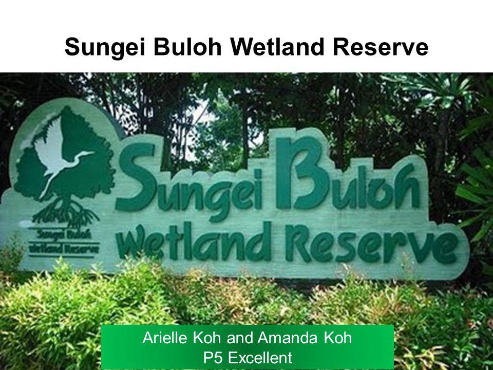 Sungei Buloh Wetland Reserve Arielle Koh and Amanda Koh P5 Excellent