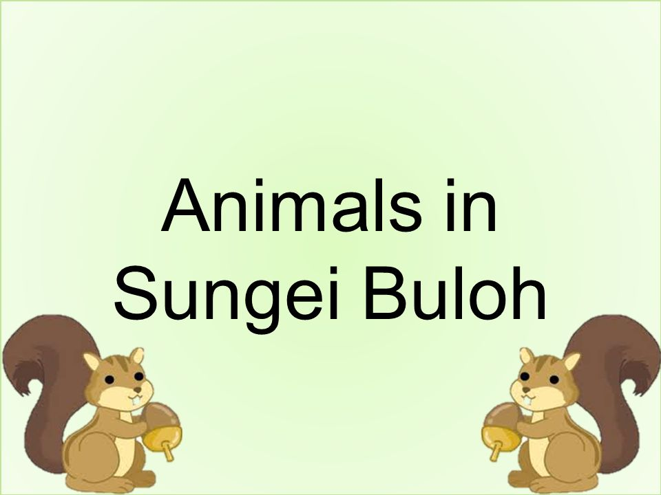 Animals in Sungei Buloh
