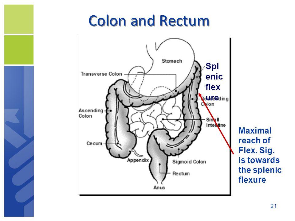 Colon and Rectum Spl enic flex ure Maximal reach of Flex. Sig. is towards the splenic flexure 21