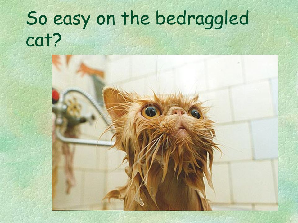 So easy on the bedraggled cat?