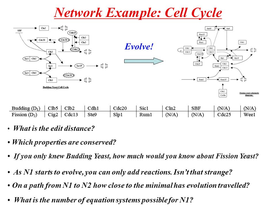 Network Example: Cell Cycle Evolve. What is the edit distance.