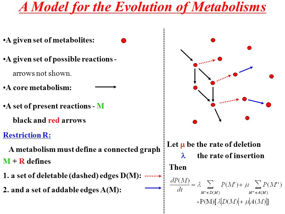 A Model for the Evolution of Metabolisms A core metabolism: A given set of metabolites: A given set of possible reactions - arrows not shown.