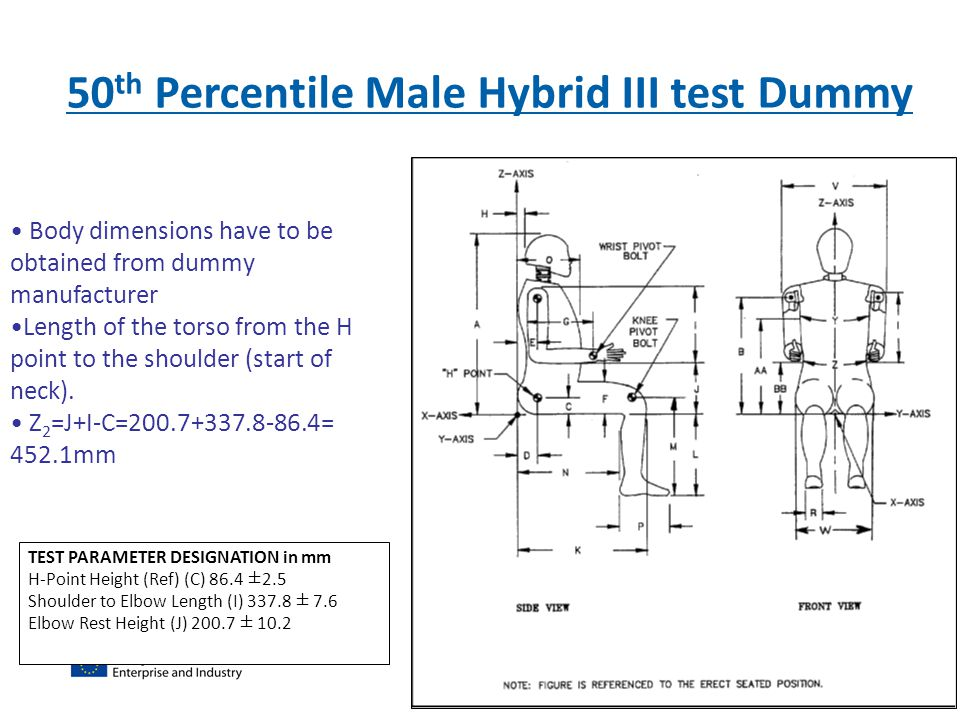 50 th Percentile Male Hybrid III test Dummy Body dimensions have to be obtained from dummy manufacturer Length of the torso from the H point to the sh