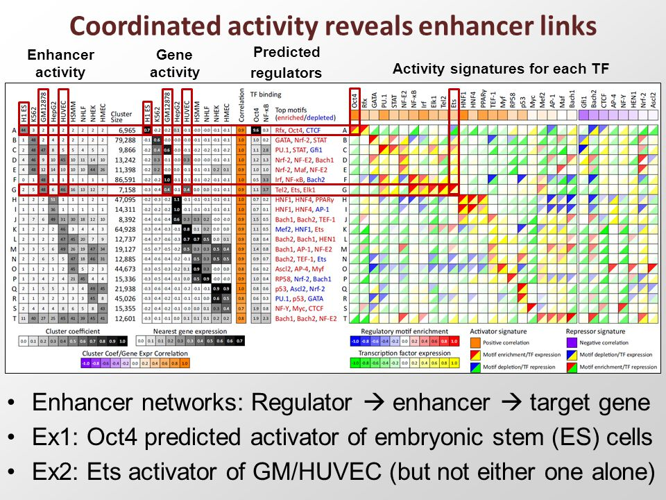 Coordinated activity reveals enhancer links Enhancer networks: Regulator  enhancer  target gene Ex1: Oct4 predicted activator of embryonic stem (ES) cells Ex2: Ets activator of GM/HUVEC (but not either one alone) Enhancer activity Gene activity Predicted regulators Activity signatures for each TF