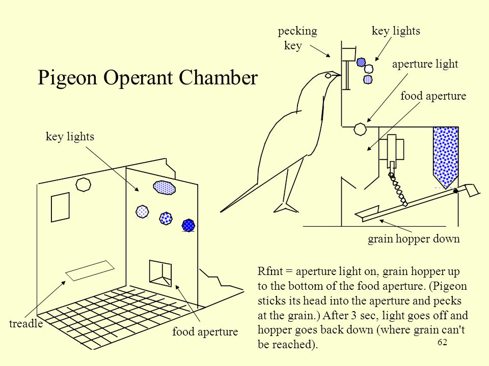 62 Pigeon Operant Chamber Rfmt = aperture light on, grain hopper up to the bottom of the food aperture. (Pigeon sticks its head into the aperture and