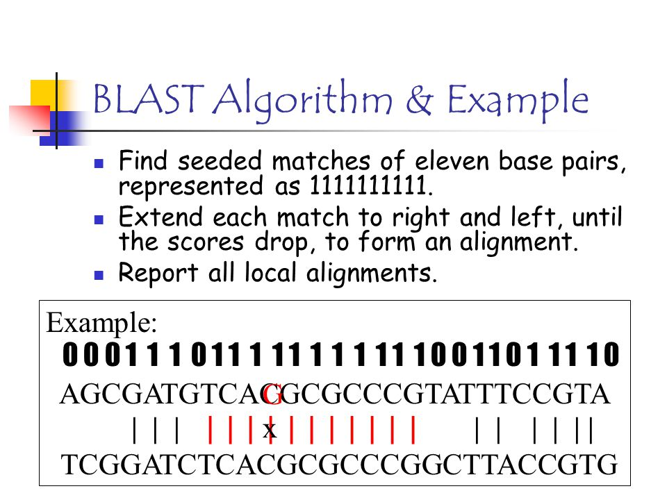 BLAST Algorithm & Example Find seeded matches of eleven base pairs, represented as 1111111111. Extend each match to right and left, until the scores d