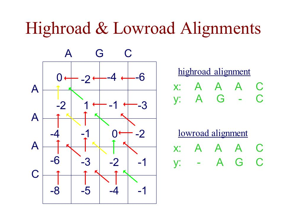 Highroad & Lowroad Alignments A -2 A -4 CAG A -6 C -8 0 -6 -2 -4 1 -3 0-2 -3 -2 -5-4 x: y: A G A A A - C C lowroad alignment x: y: A - A G A A C C highroad alignment