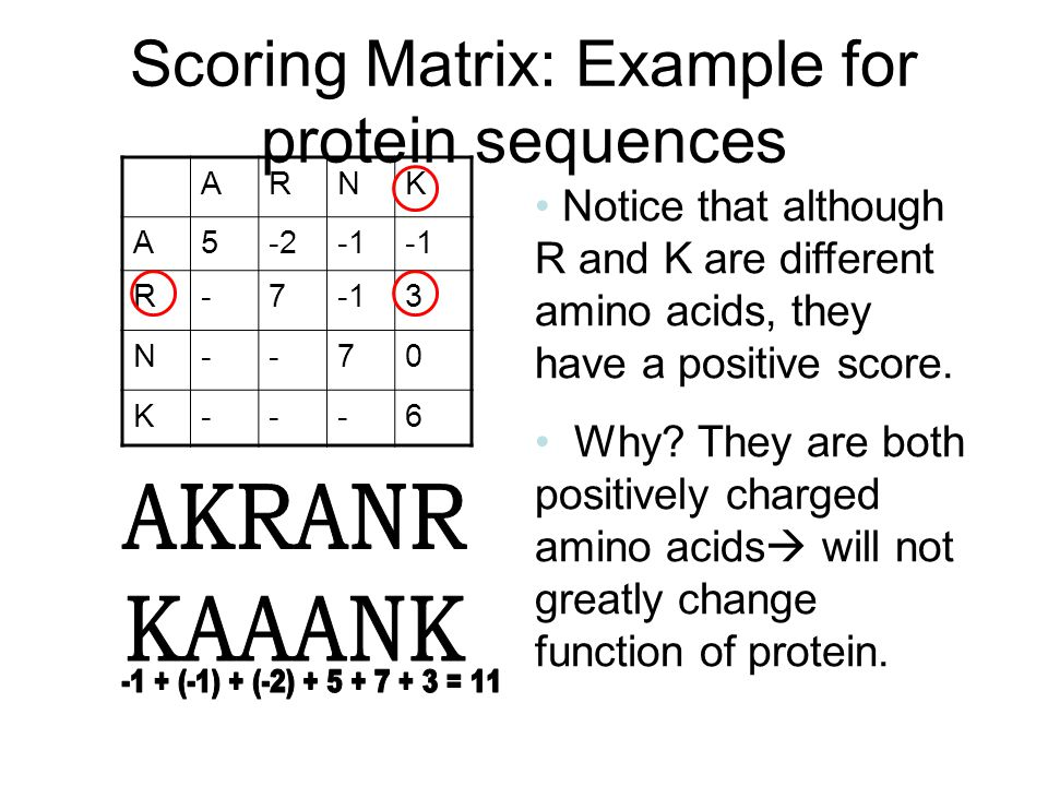 Scoring Matrix: Example for protein sequences ARNK A5-2 R-7 3 N--70 K---6 Notice that although R and K are different amino acids, they have a positive