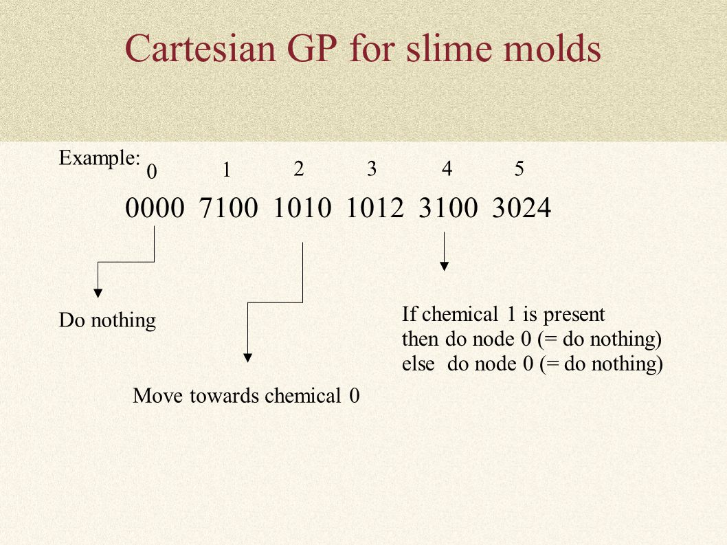 Cartesian GP for slime molds Example: 0000 7100 1010 1012 3100 3024 If chemical 1 is present then do node 0 (= do nothing) else do node 0 (= do nothin