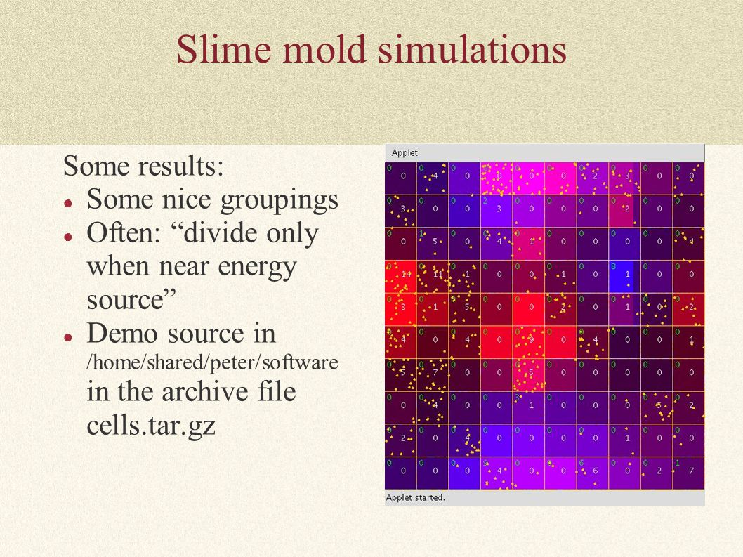 Slime mold simulations Some results: ● Some nice groupings ● Often: divide only when near energy source ● Demo source in /home/shared/peter/software in the archive file cells.tar.gz