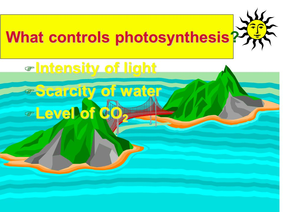 F Intensity of light F Scarcity of water F Level of CO 2 What controls photosynthesis What controls photosynthesis