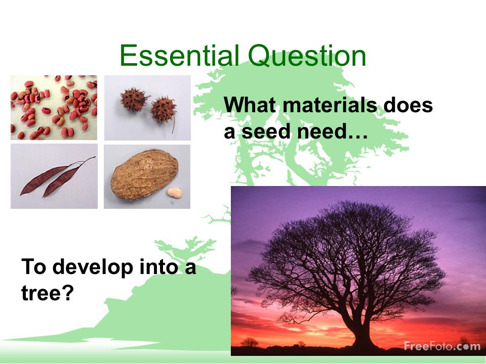 Essential Question What materials does a seed need… To develop into a tree