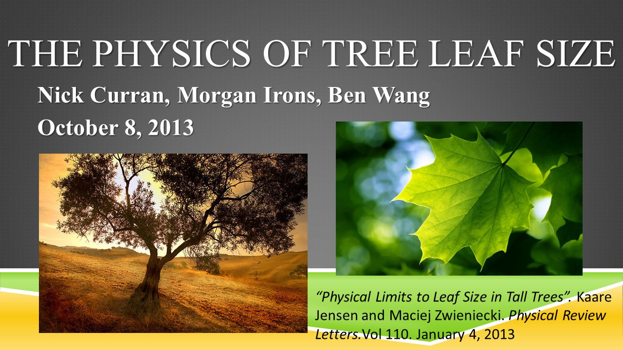 """THE PHYSICS OF TREE LEAF SIZE Nick Curran, Morgan Irons, Ben Wang October 8, 2013 """"Physical Limits to Leaf Size in Tall Trees"""". Kaare Jensen and Macie"""