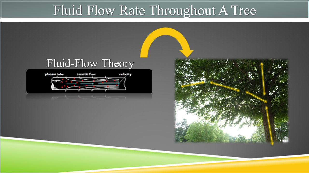 Fluid Flow Rate Throughout A Tree Fluid-Flow Theory