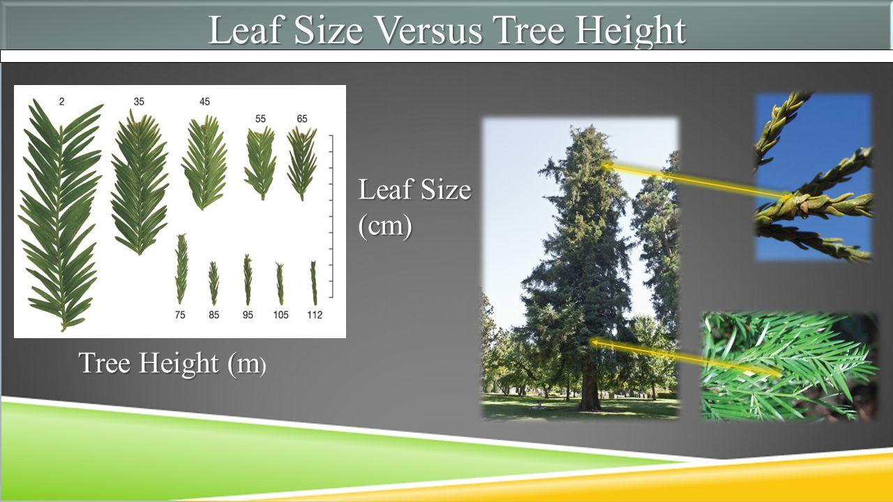 Leaf Size Versus Tree Height Leaf Size (cm) Tree Height (m Tree Height (m )
