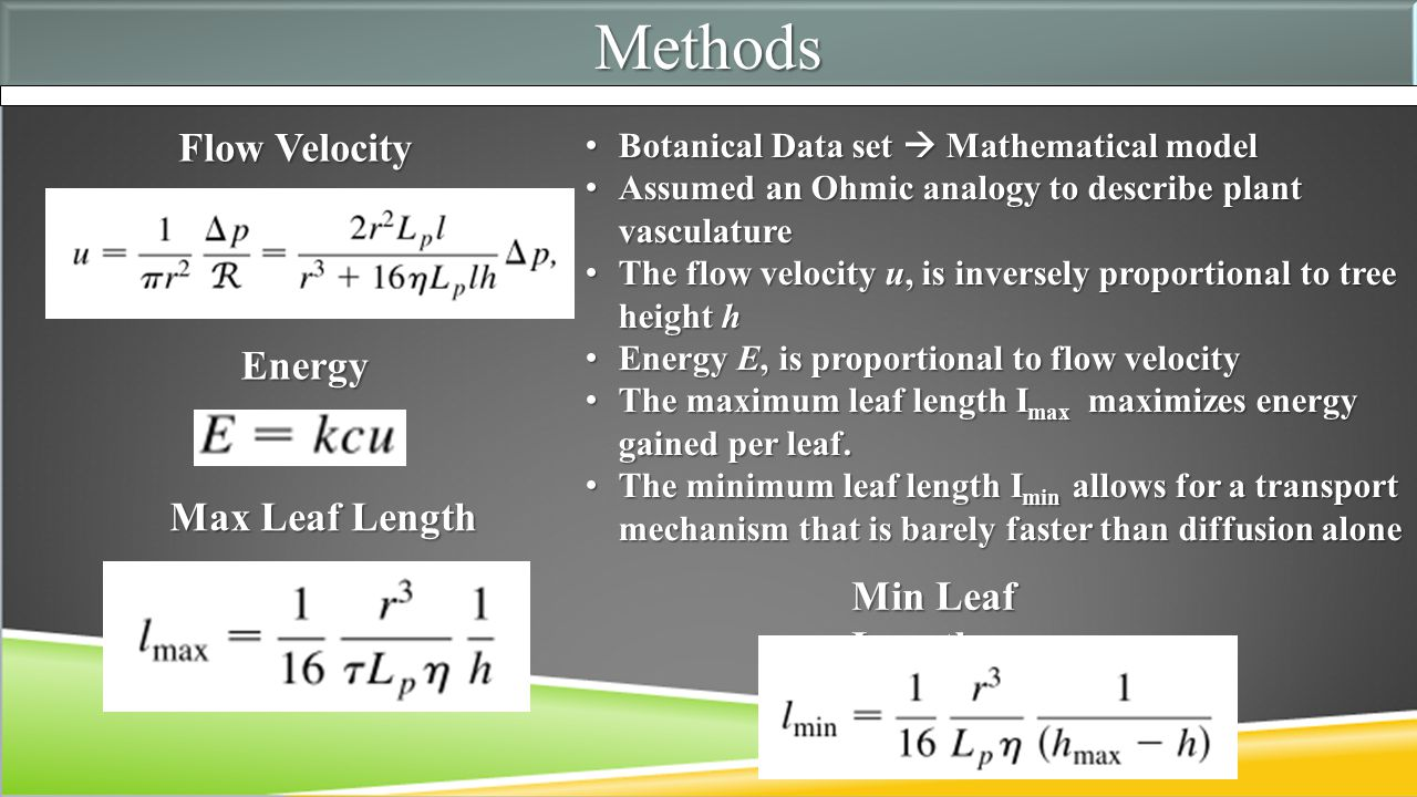 MethodsMethods Flow Velocity Energy Max Leaf Length Min Leaf Length Botanical Data set  Mathematical model Botanical Data set  Mathematical model Assumed an Ohmic analogy to describe plant vasculature Assumed an Ohmic analogy to describe plant vasculature The flow velocity u, is inversely proportional to tree height h The flow velocity u, is inversely proportional to tree height h Energy E, is proportional to flow velocity Energy E, is proportional to flow velocity The maximum leaf length I max maximizes energy gained per leaf.