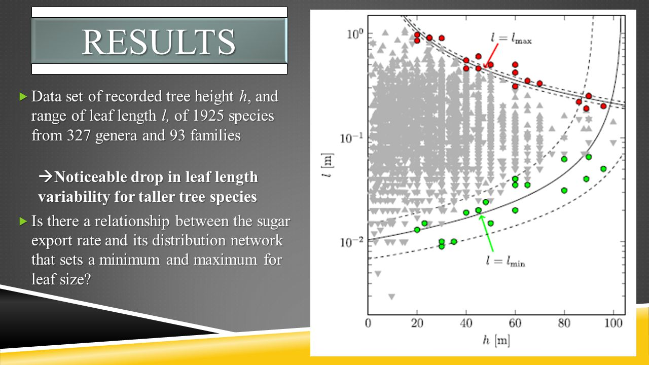 RESULTSRESULTS  Data set of recorded tree height h, and range of leaf length l, of 1925 species from 327 genera and 93 families  Noticeable drop in leaf length variability for taller tree species  Is there a relationship between the sugar export rate and its distribution network that sets a minimum and maximum for leaf size