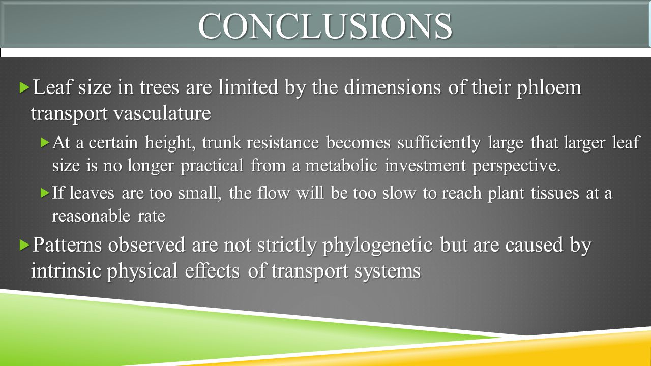 CONCLUSIONSCONCLUSIONS  Leaf size in trees are limited by the dimensions of their phloem transport vasculature  At a certain height, trunk resistance becomes sufficiently large that larger leaf size is no longer practical from a metabolic investment perspective.