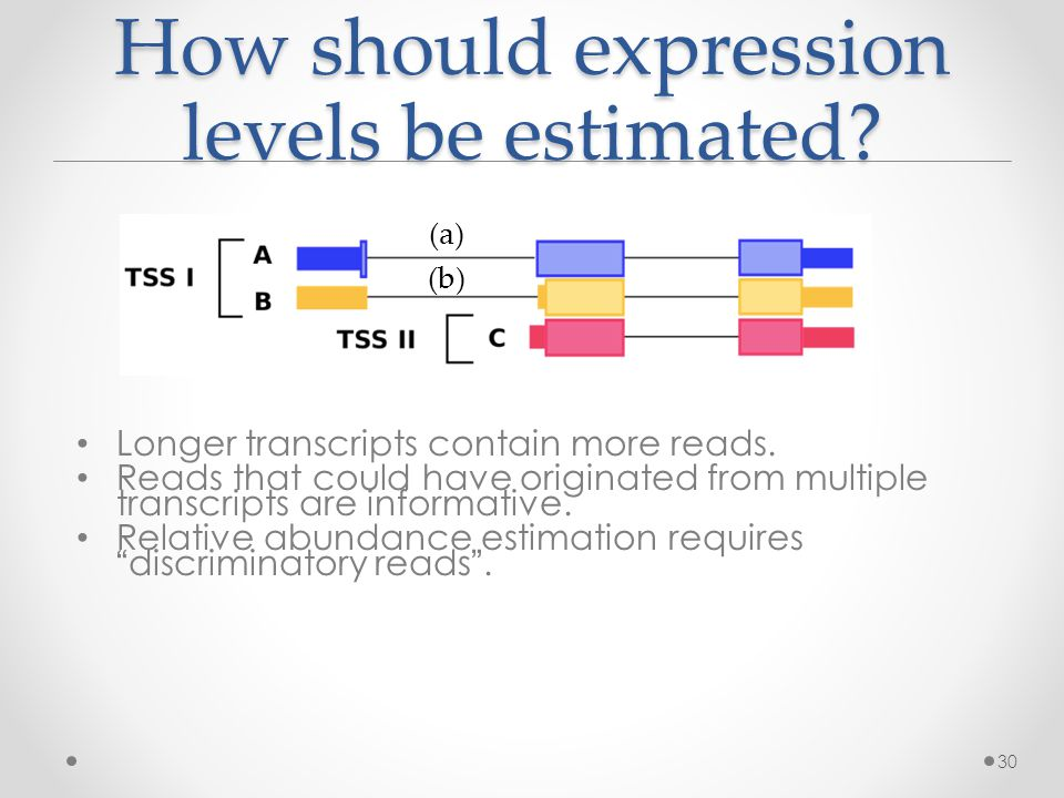 How should expression levels be estimated. Longer transcripts contain more reads.