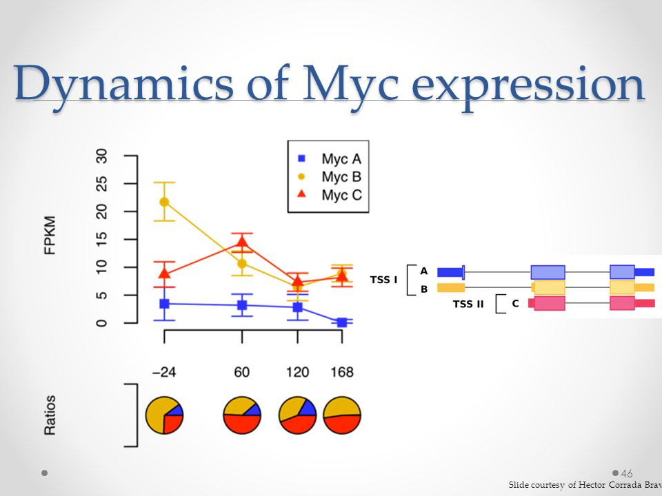 Dynamics of Myc expression 46 Slide courtesy of Hector Corrada Bravo