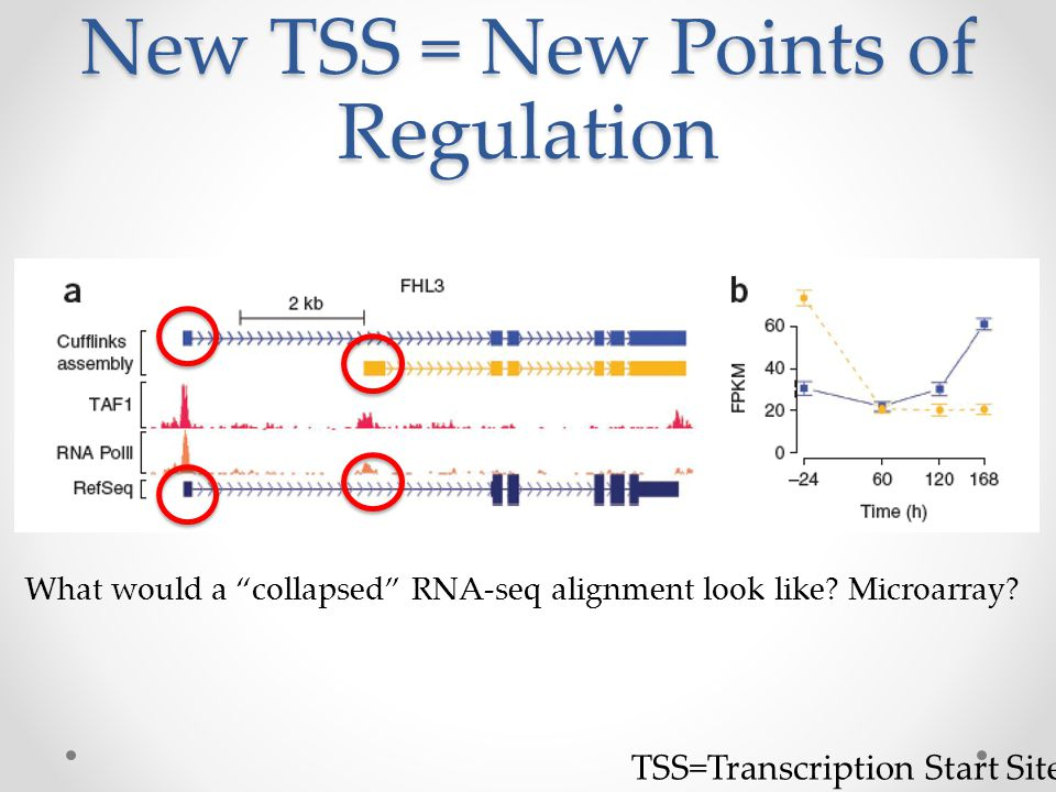 New TSS = New Points of Regulation TSS=Transcription Start Site What would a collapsed RNA-seq alignment look like.
