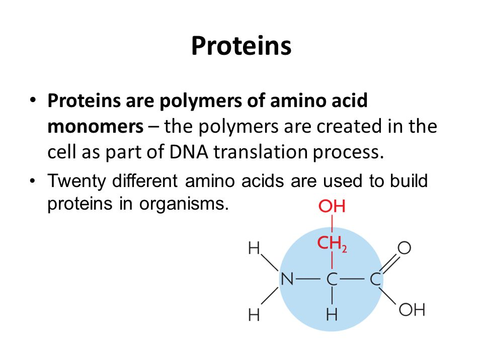 Proteins Proteins are polymers of amino acid monomers – the polymers are created in the cell as part of DNA translation process.