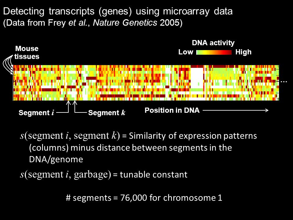 Detecting transcripts (genes) using microarray data (Data from Frey et al., Nature Genetics 2005) s(segment i, segment k) = Similarity of expression patterns (columns) minus distance between segments in the DNA/genome s(segment i, garbage) = tunable constant # segments = 76,000 for chromosome 1 Mouse tissues DNA activity Low High Position in DNA … Segment i Segment k