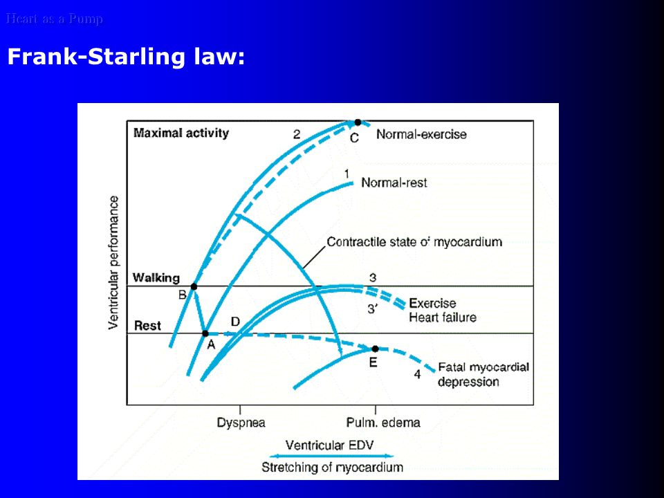 Heart as a Pump Frank-Starling law: