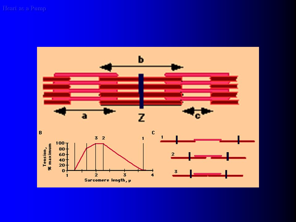 Heart as a Pump AFTERLOAD Laplace's law cardiac hypertrophy: increased wall thickness balances the increased pressure, and the wall stress remains unchanged during the phase of compensatory hypertrophy.