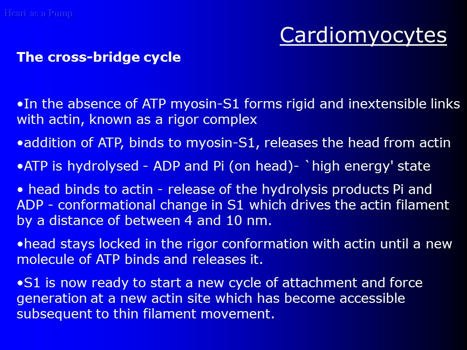 Heart as a Pump The activity of this pump is regulated by several factors, including thyroid hormone and, with regard to K+ homeostasis, catecholamines, insulin, and the state of K+ balance.