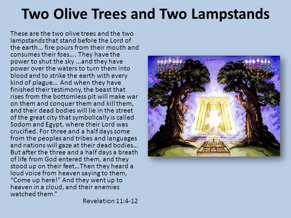 Two Olive Trees and Two Lampstands These are the two olive trees and the two lampstands that stand before the Lord of the earth… fire pours from their mouth and consumes their foes….