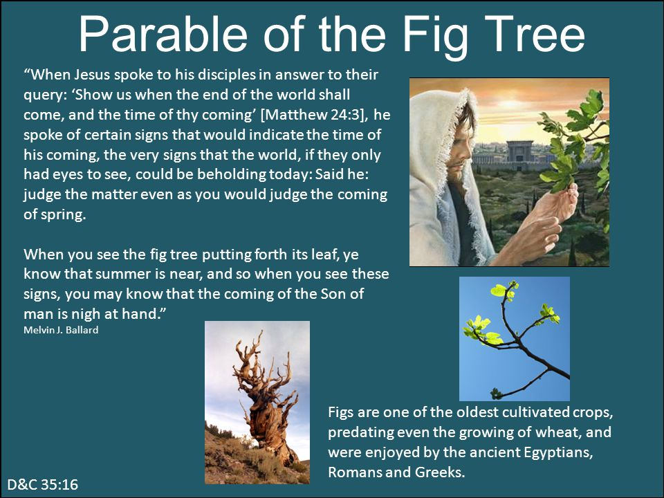 Parable of the Fig Tree When Jesus spoke to his disciples in answer to their query: 'Show us when the end of the world shall come, and the time of thy coming' [Matthew 24:3], he spoke of certain signs that would indicate the time of his coming, the very signs that the world, if they only had eyes to see, could be beholding today: Said he: judge the matter even as you would judge the coming of spring.