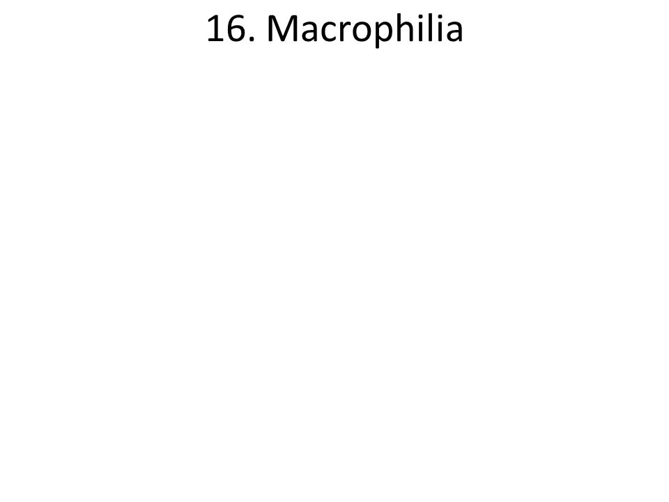 16. Macrophilia