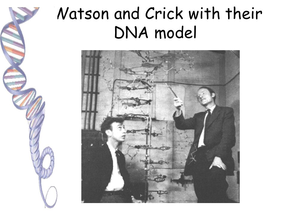The Evidence Search for genetic material: James Watson and Francis Crick used this photo with other evidence to describe the structure of DNA. X-ray d