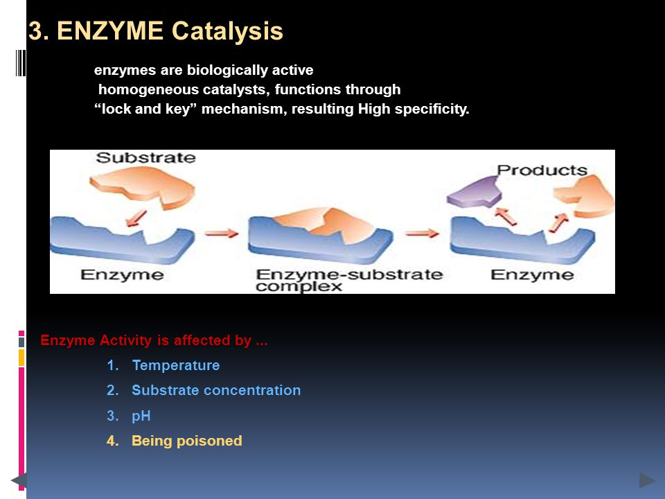 Enzyme Activity is affected by... 1.Temperature 2.Substrate concentration 3.pH 4.Being poisoned 3.