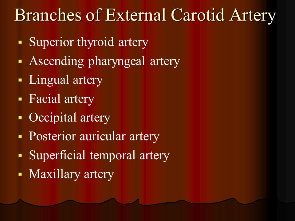 Branches of External Carotid Artery   Superior thyroid artery   Ascending pharyngeal artery   Lingual artery   Facial artery   Occipital art