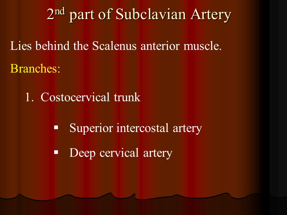 2 nd part of Subclavian Artery Lies behind the Scalenus anterior muscle. Branches: 1.Costocervical trunk  Superior intercostal artery  Deep cervical