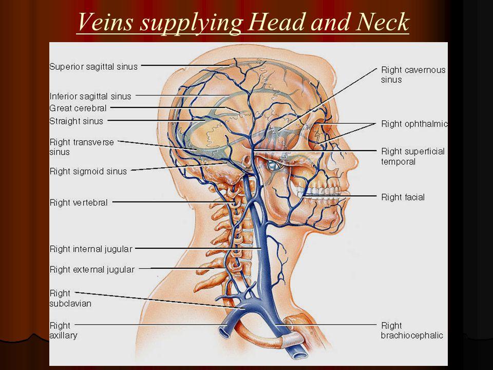 Veins supplying Head and Neck