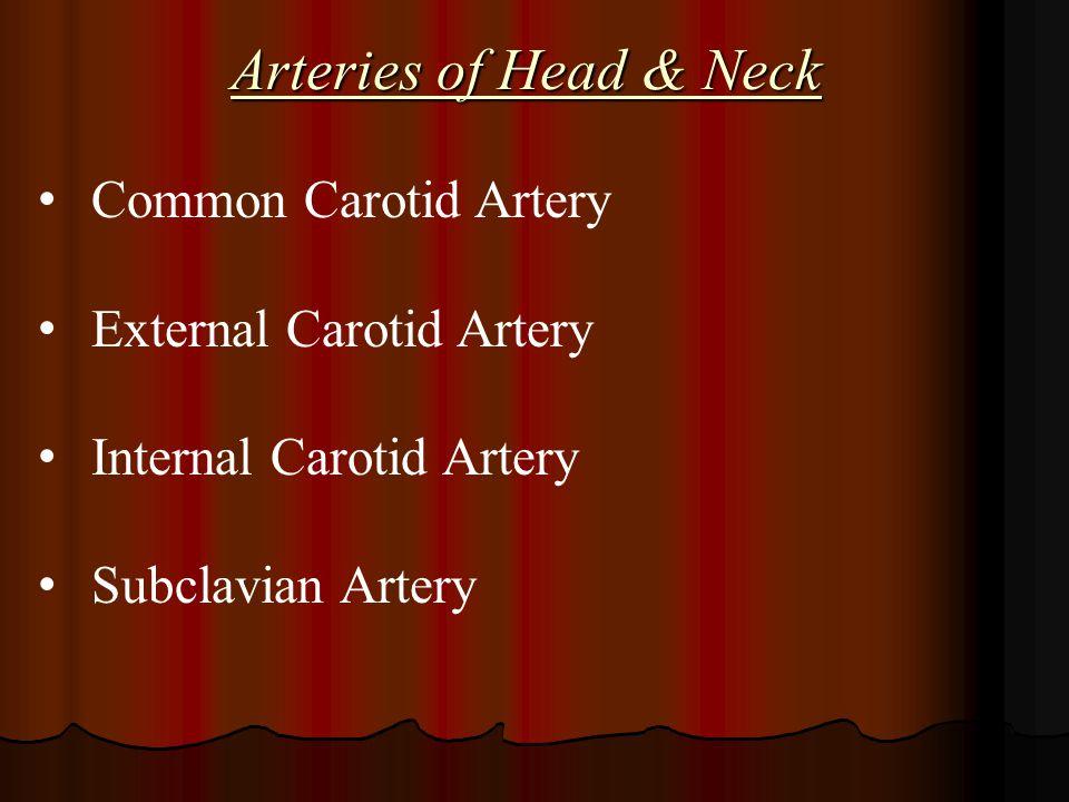Arteries of Head & Neck Common Carotid Artery External Carotid Artery Internal Carotid Artery Subclavian Artery