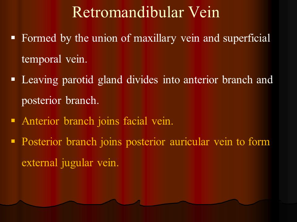 Retromandibular Vein  Formed by the union of maxillary vein and superficial temporal vein.  Leaving parotid gland divides into anterior branch and p