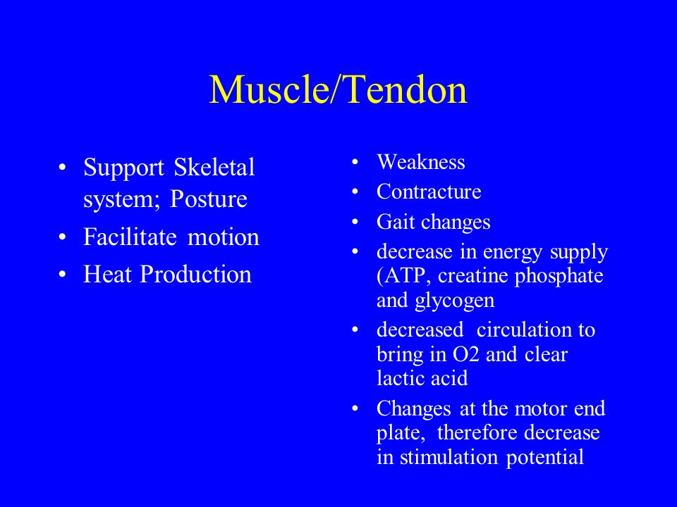 Neurology Sensory –requires more stimuli to elicit response –awareness of position reflexes Somatic –decreased transmission speed down axon resulting in slower and weaker contraction ability –prolonged refractory period before next contraction –less coordinated motion