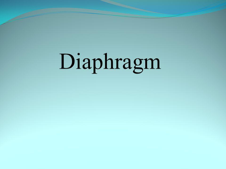 Nerve supply of diaphragm