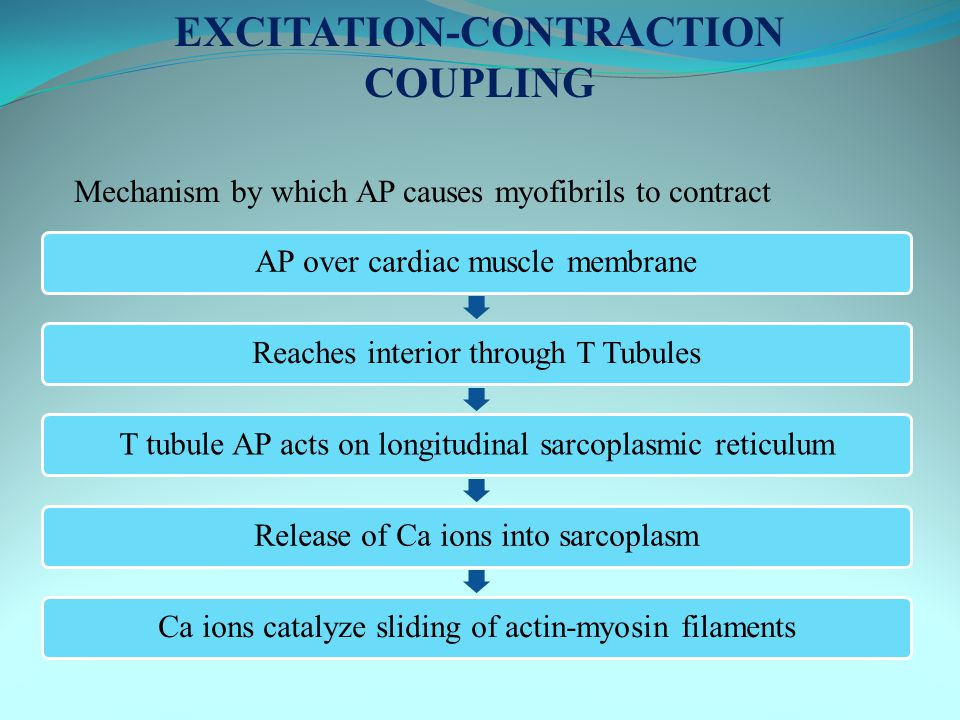 AP over cardiac muscle membraneReaches interior through T TubulesT tubule AP acts on longitudinal sarcoplasmic reticulumRelease of Ca ions into sarcop