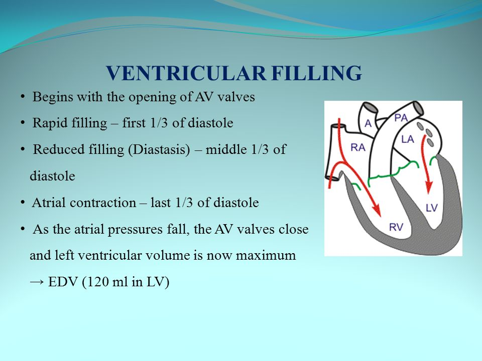 VENTRICULAR FILLING Begins with the opening of AV valves Rapid filling – first 1/3 of diastole Reduced filling (Diastasis) – middle 1/3 of diastole At