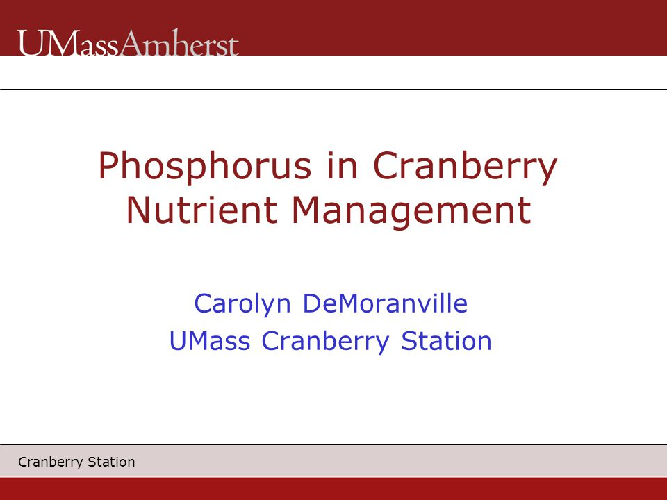Cranberry Station Phosphorus in Cranberry Nutrient Management Carolyn DeMoranville UMass Cranberry Station