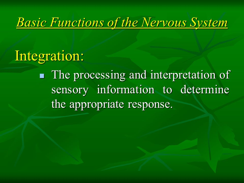 Basic Functions of the Nervous System Integration: The processing and interpretation of sensory information to determine the appropriate response.
