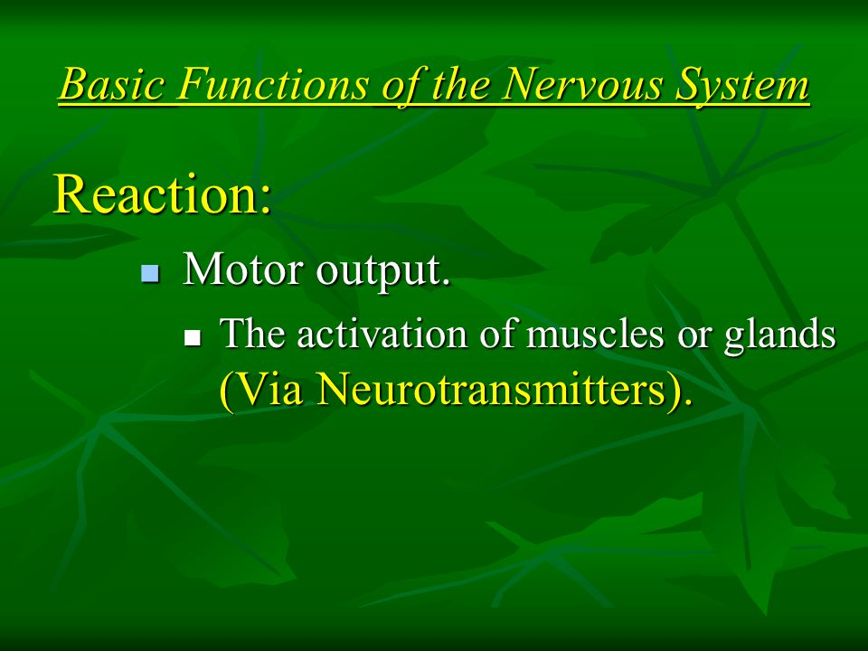 Basic Functions of the Nervous System Reaction: Motor output.