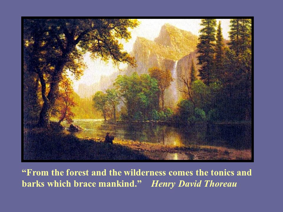 From the forest and the wilderness comes the tonics and barks which brace mankind. Henry David Thoreau
